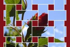 rose-layer